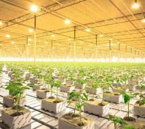 Освещение объектов сельского хозяйства